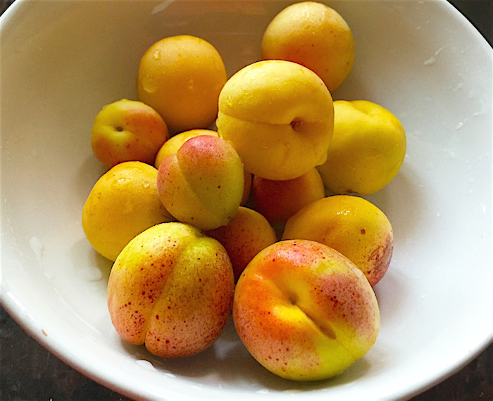 Apricots from our backyard