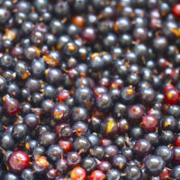 Fresh Blackcurrant | AZCookbook.com