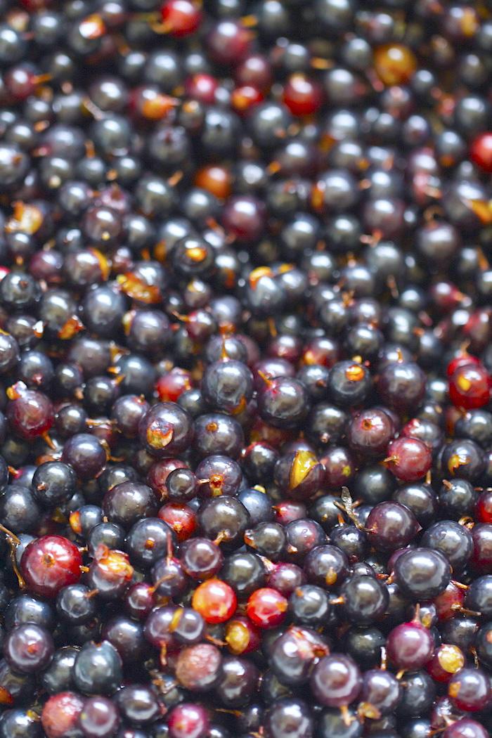 Fresh Blackcurrant   AZCookbook.com